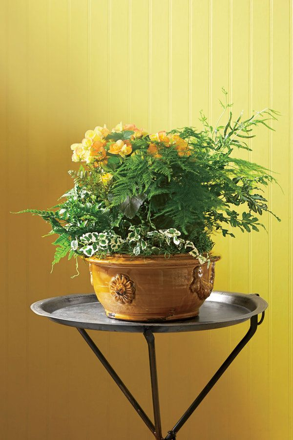 From the sunny yellow walls to the golden, glazed urn, this setting begs for a lush planting featuring warm tones. A long-blooming begonia, as well as fine-textured and variegated foliage, makes this combination work. Note how the small, variegated vine lends definition amid the green foliage.      CONTAINER RECIPE   1. Rieger begonia   2. silver lace fern (Pteris ensiformis)   3. autumn fern (Dryopteris erythrosora)   4. variegated creeping fig (Ficus pumila 'Variegata')   5. asparagus…