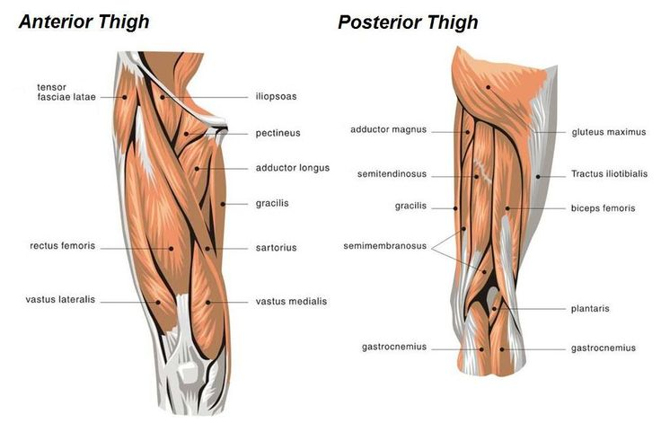 muscle diagram of leg - Google Search | Workout | Pinterest ...