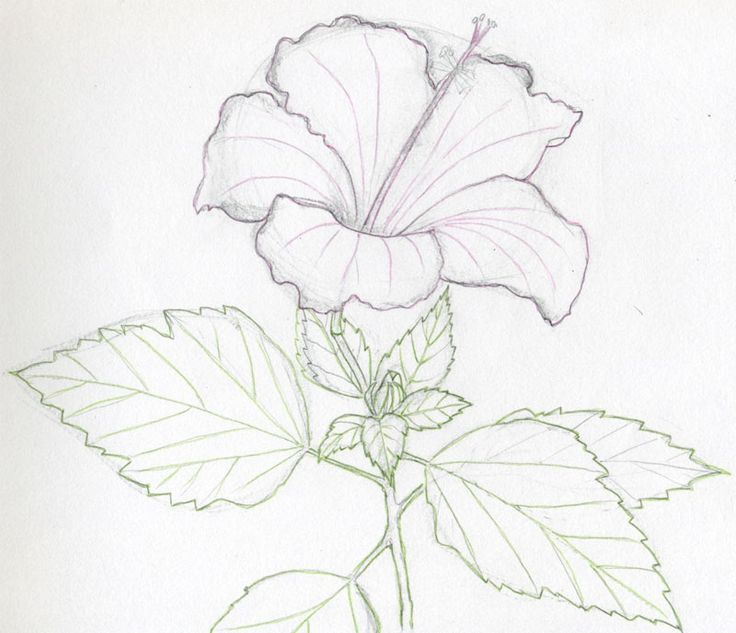 Flower Sketch  - Dr. Odd