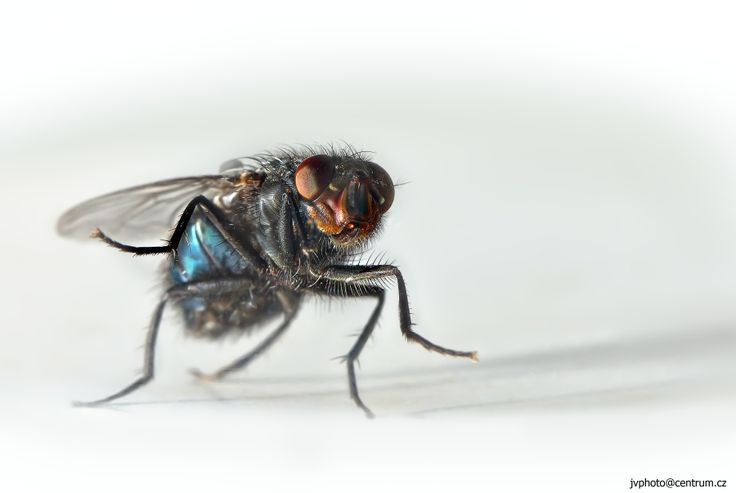 Surprised fly