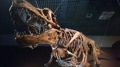 まるでジュラシックパークの世界のような恐竜の化石恐竜迫力撮影会はゴールデンウィークに東海大学自然史博物館恐竜ホールで開催されます  当日はアジアのティラノザウルスとも言われているタルボサウルスの口元で撮影ができるそうです恐竜の骨格なんて見るだけでワクワクしてしまいます  映画のワンシーンのような興奮を味わうことができそうなイベント見逃せませんよ tags[静岡県]