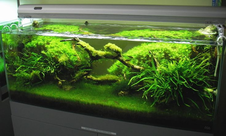 ADA lighting at Aqua Forest and nice low PAr values-who knew? - Aquarium Plants - Barr Report