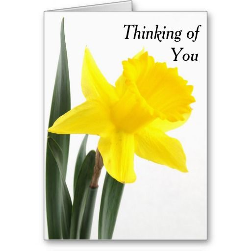 Single Yellow Narcissus Daffodil Cards - $4.50 - Single Yellow Narcissus Daffodil Cards - by ‪#‎RGebbiePhoto‬ @ zazzle - ‪#‎daffodil ‪#‎yellow ‪#‎flower‬ - A vibrant yellow narcissus daffodil over white. Personalize this line with customizable text! Add Your Name to customize! Symbolizing rebirth and new beginnings, the daffodil is virtually synonymous with spring.