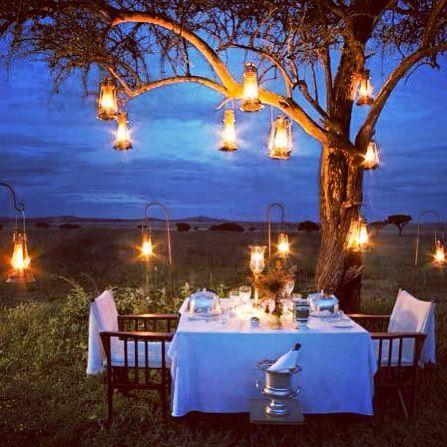 just magic #nature #lights #tree #romantic #night