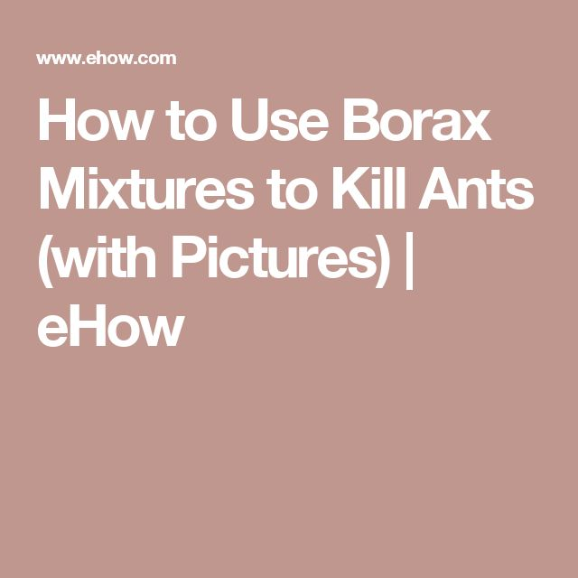 How to Use Borax Mixtures to Kill Ants (with Pictures) | eHow