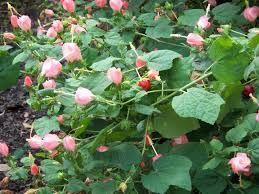Image Result For Colibri Garden In Fl