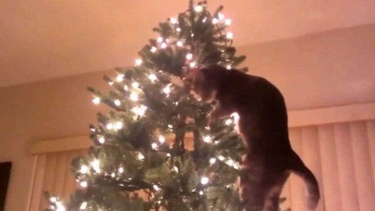 Коты и ёлки
