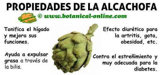 propiedades de las alcachofas, protege el hígado y