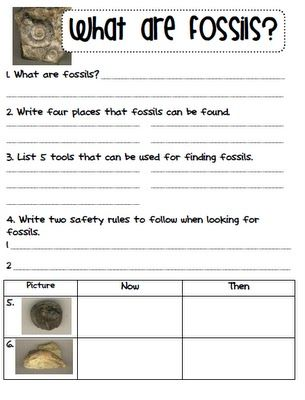 Fossils: Fossils Worksheet