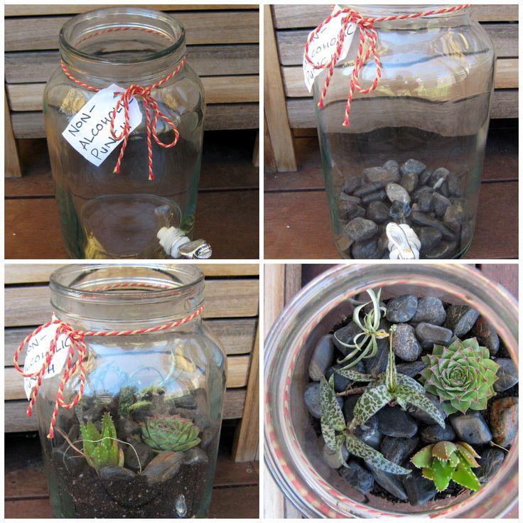 Punch Bowl Succulent terrarium