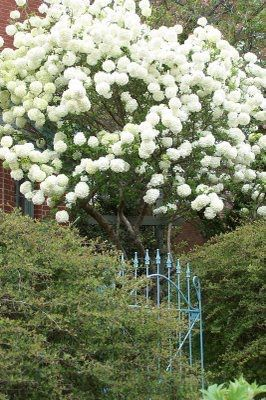 tara dillard garden designers bloglink taras trinity of the southern garden