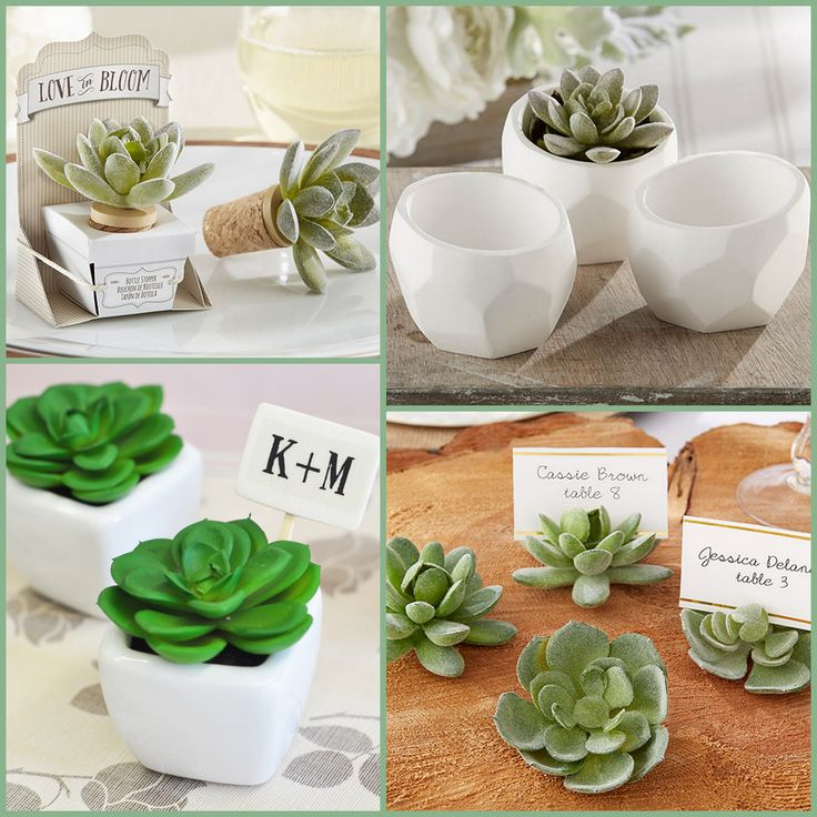 Rustic Succulent Party Favors from HotRef.com
