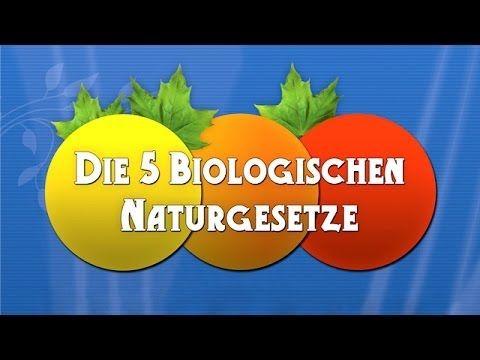 Explicación de Las 5 leyes biológicas