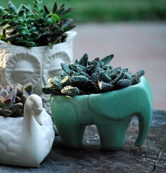 Elephant planter in mint green ceramic succulent by claylicious