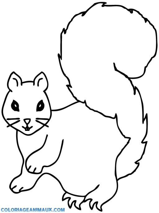 Viac ako 25 najlep ch n padov na pintereste na t mu coloriage cureuil dessin d animaux - Coloriage d ecureuil ...