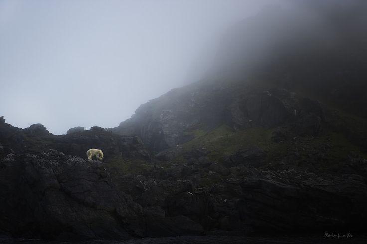Sad bear by Ola Loe on 500px