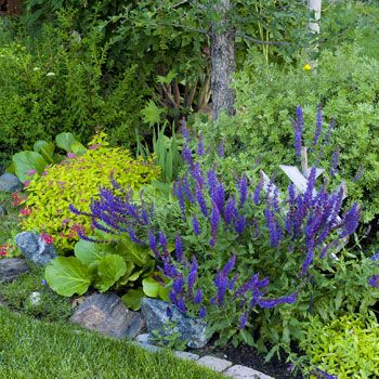 Hardy low maintenance perennials and shrubs grow here for Low maintenance perennial bushes