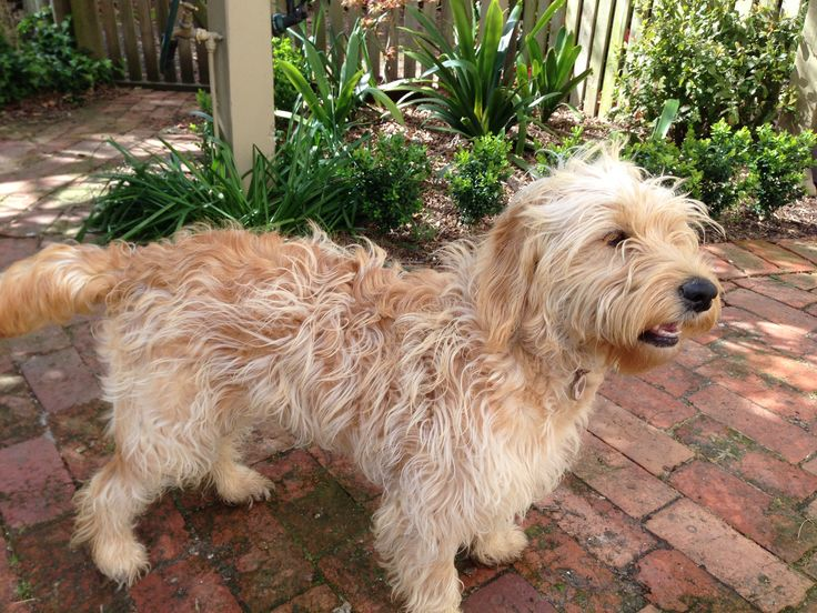 Banksia Park Puppies Lucy4