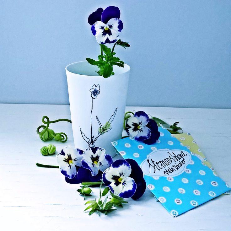 Stemorsblomst - Viola tricolor