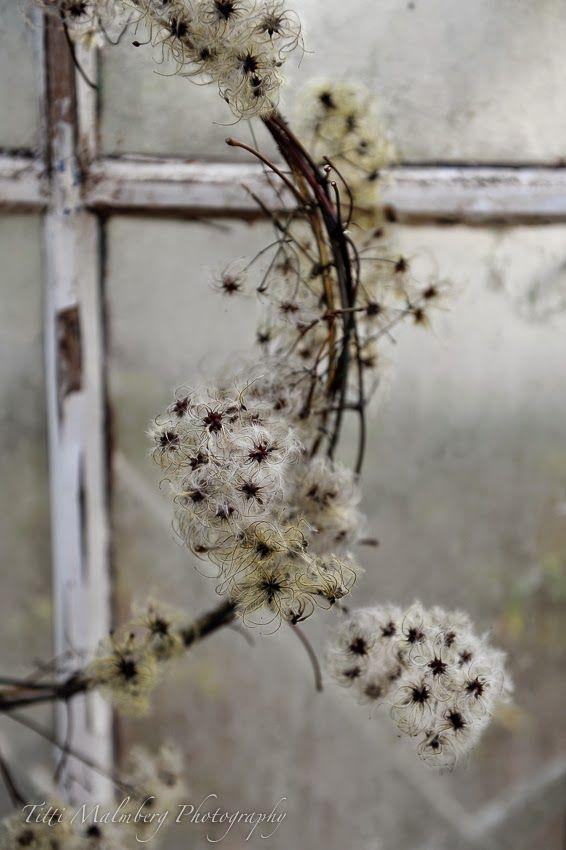 HWIT BLOGG: FLOWERS by titti & ingrid - Naturligt vackert