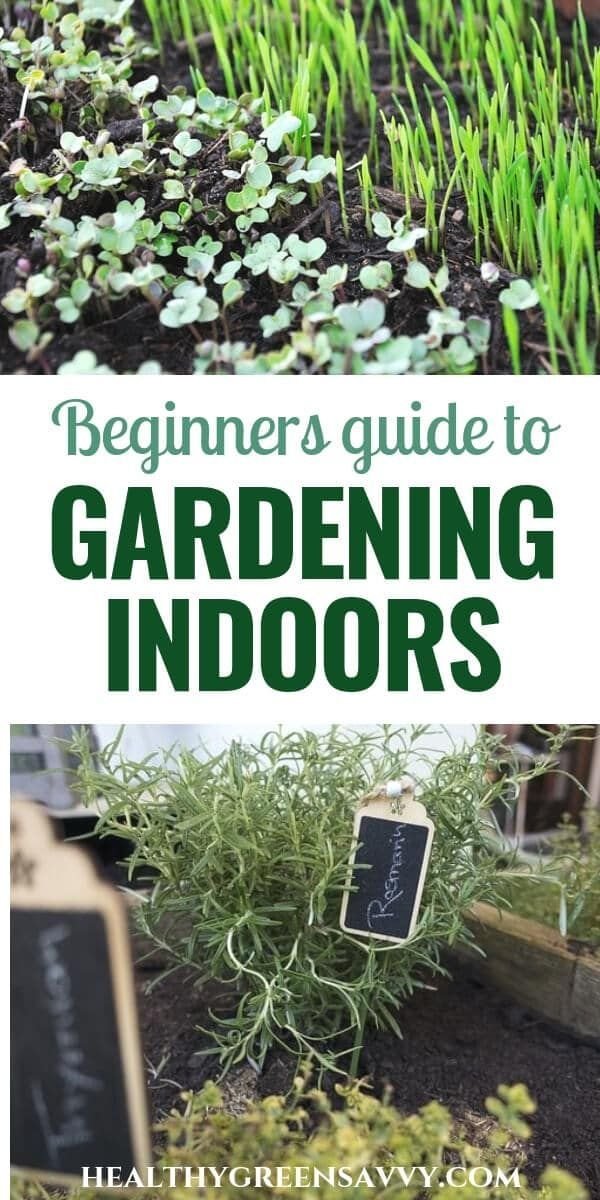 How To Grow Vegetables Indoors This Season Growing Vegetables