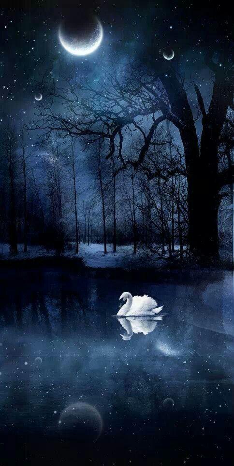 """""""Regalo del universo recibir energia del claro de Luna"""" Swan Lake by…"""