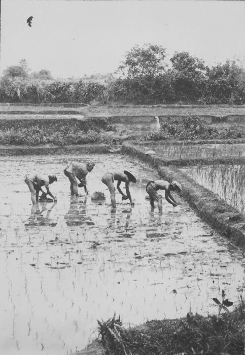 Working in the field, 1910-1920