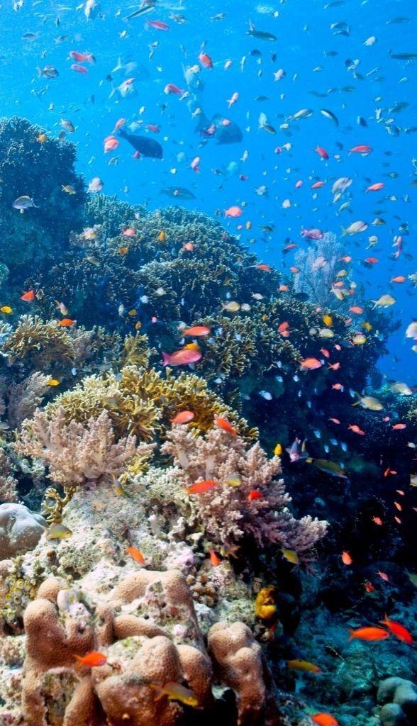 Bali's underwater scenery at Menjangan Island, by John Anderson.