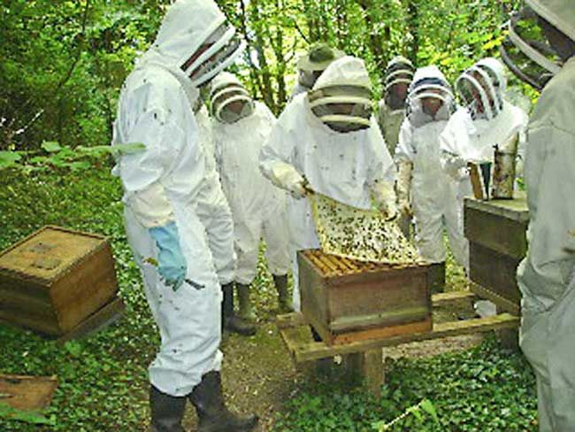 Brighton and Lewes Beekeepers