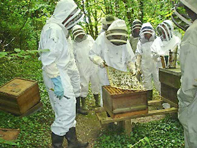 Brighton and Lewes Beekeepers