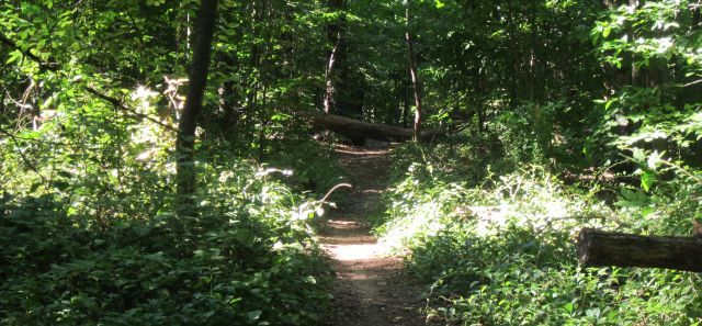 Runners Guide to Rock Creek Park
