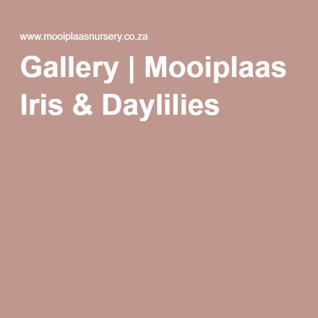 Gallery | Mooiplaas Iris & Daylilies
