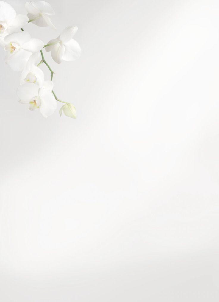 xl-orchidee-met-waterdruppel.jpg (1000×1378)