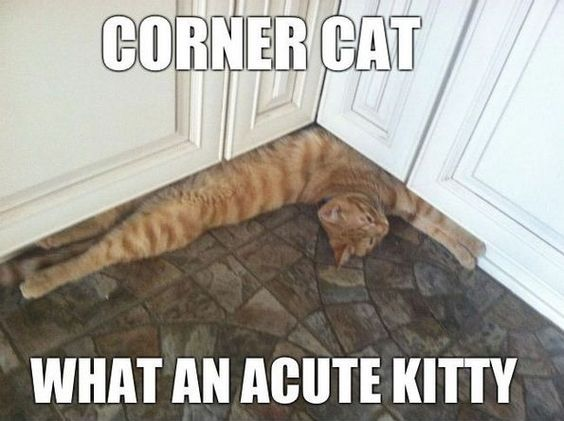Top 27 Hilarious Cat Pictures #funny cats #cats humor