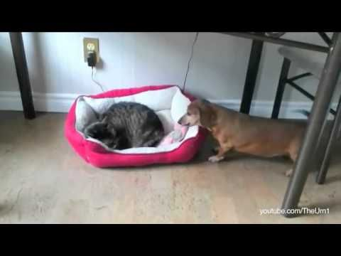 When These Dogs Find a Cat in Their Beds, Their Reactions are Too Funny!