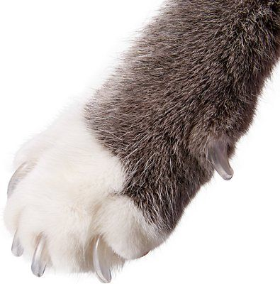 Purrdy Paws Soft Cat Nail Caps, 40 count, Medium, Ultra Glow in the Dark - Chewy.com
