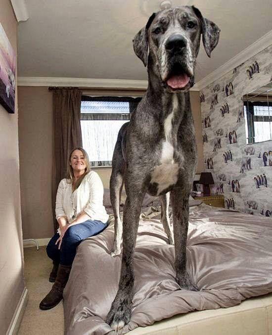 Whoa!....That's a huge Dawg!