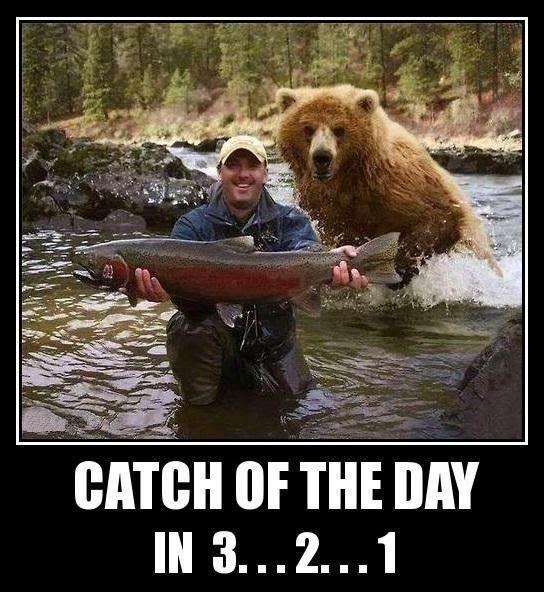 Funny Bear Catch Day