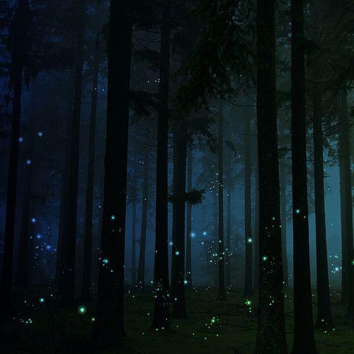 Fireflies in the woods.