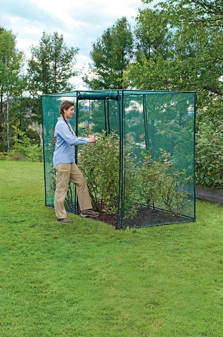 Crop Cage, 4' x 8' x 6' Tall | Blueberry Bush Covers | Crop Protection
