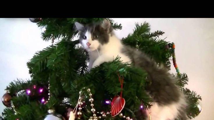 Cats vs. Christmas trees! This cheerful New Year!   Кошки против ёлок! Э...