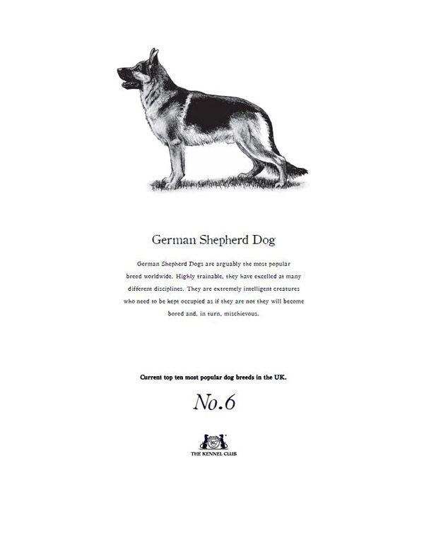 German Shepherd Dog Tea Towel The Kennel Club Official Shop