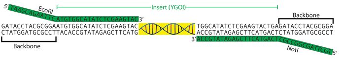 Addgene: Plasmid Cloning by PCR (with Protocols)...and a little primer design! :)