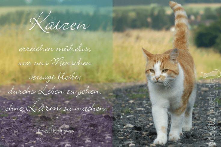 Katzen erreichen mühelos, was uns Menschen… #spruchbilder #spruchbilderkatzen #katzenspruchbilder #katzensprüche #katzenzitate #katzenweisheiten