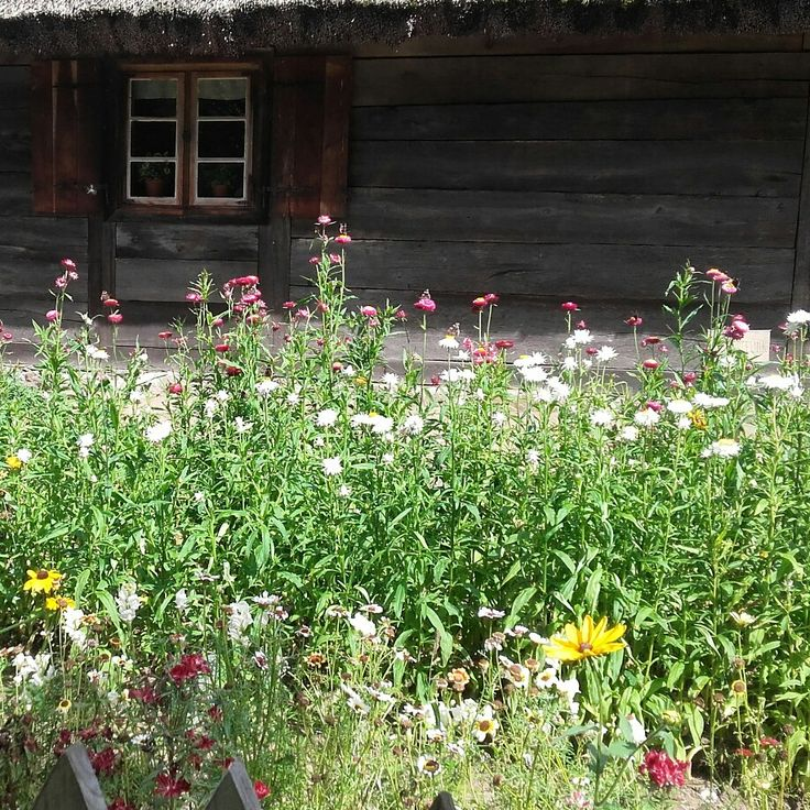 Kwiaty w skansenie w olsztynku