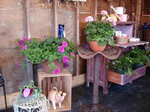 Tractor Seat Plant Varieties : Gardening ideas really like the tractor seat plant