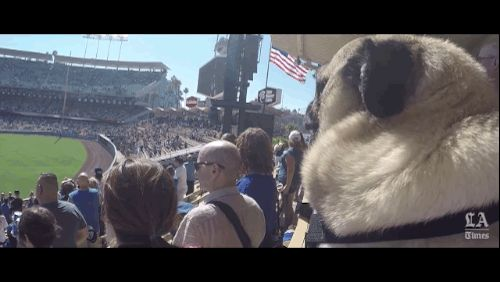 Gizmo takes a moment of reflection during the singing of the national anthem. @melbel804