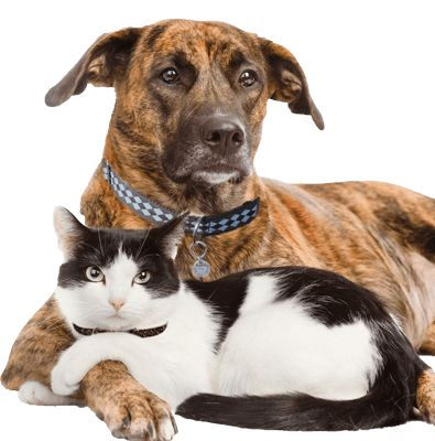shelter search.....find an animal shelter or rescue near you!