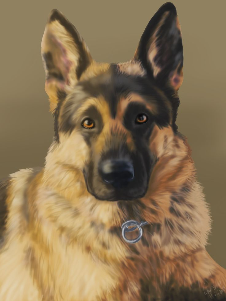 German sheperd. A gift; drawing by ArtWolf