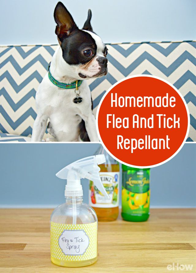 Many flea and tick repellents are full of chemicals, and are pretty harsh on animals with sensitive skin. Luckily, there is an easy home remedy that will keep your fur babies flea- and tick-free, and it can be made in minutes with a few household ingredients. http://www.ehow.com/how_4536875_make-homemade-flea-repellent.html?utm_source=pinterest.com&utm_medium=referral&utm_content=freestyle&utm_campaign=fanpage